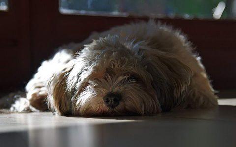 宠物猫咪和狗狗精神萎靡VS无聊发困