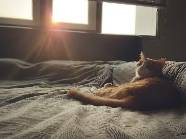 每天天不亮猫咪就喊你起床,怎么解决这个问题?