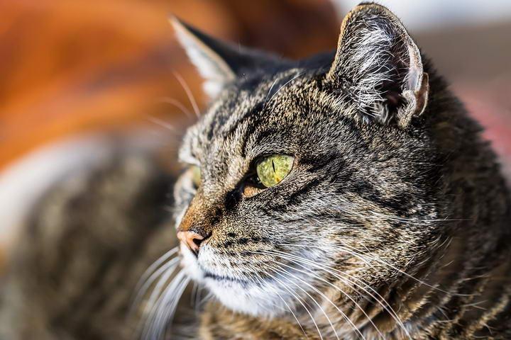 老年宠物狗狗和猫咪常见疾病之干眼症