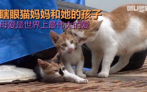 瞎眼猫妈妈和她的孩子们:不管孩子多大了在母亲眼中都是孩子!