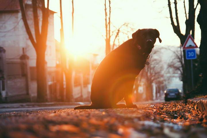 狗狗喜欢追着汽车跑怎么办?这样很危险很不安全