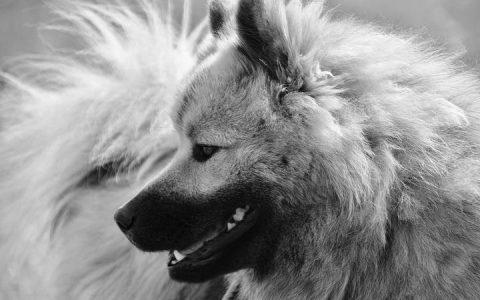 老年宠物狗狗和猫咪常见疾病之子宫蓄脓症