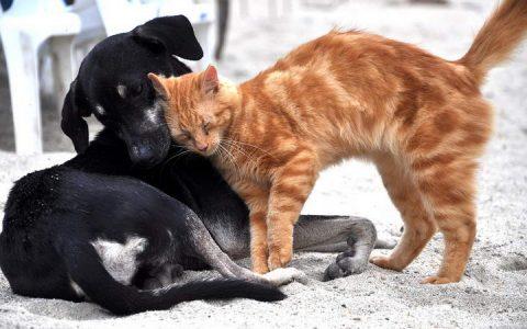 老年宠物狗狗和猫咪常见疾病之老年痴呆症