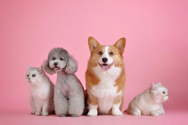 宠物狗狗和猫咪常见的恶性肿瘤——淋巴癌