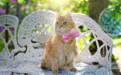 猫咪会流汗吗?宠物猫夏天的中暑危机
