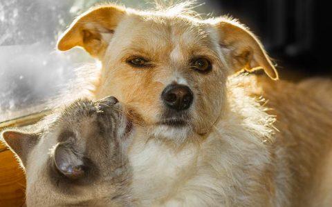 宠物猫咪和狗狗病毒性下痢不可轻忽