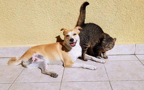利用夏天食欲不振给肥胖的猫咪和狗狗减减肥