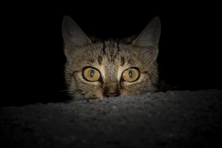 猫咪常见的人畜共患传染病