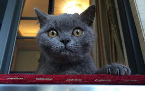 猫咪尿尿不正常?不要大意了!有可能是下泌尿道问题
