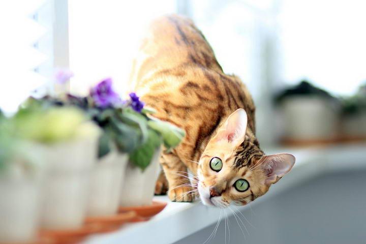 如何预防猫咪下泌尿道问题