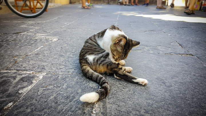 宠物母猫和母狗绝育结扎的好处有哪些?