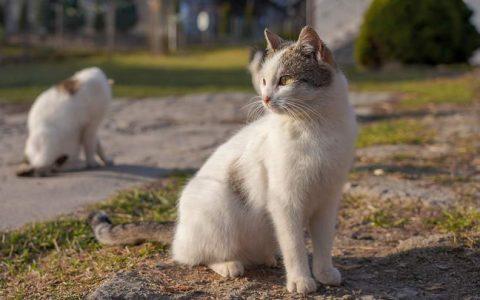 公狗和公猫绝育结扎的好处有哪些?