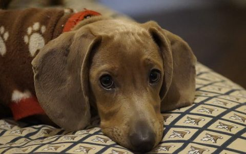 从小动作发现狗狗的瘫痪危机!