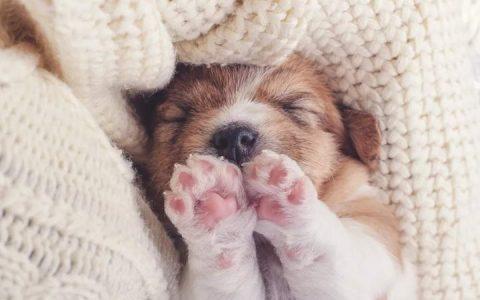 冷知识:狗狗小时候肉垫是粉红色,长大怎么变成黑色了?