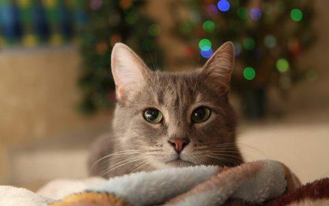 照顾艾滋猫,掌握四招就不用怕