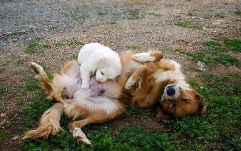 新手铲屎官来学习下母犬分娩的一些照料事项