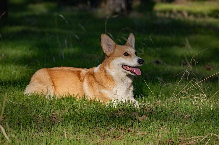 夏天狗狗生命中的大敌——心丝虫