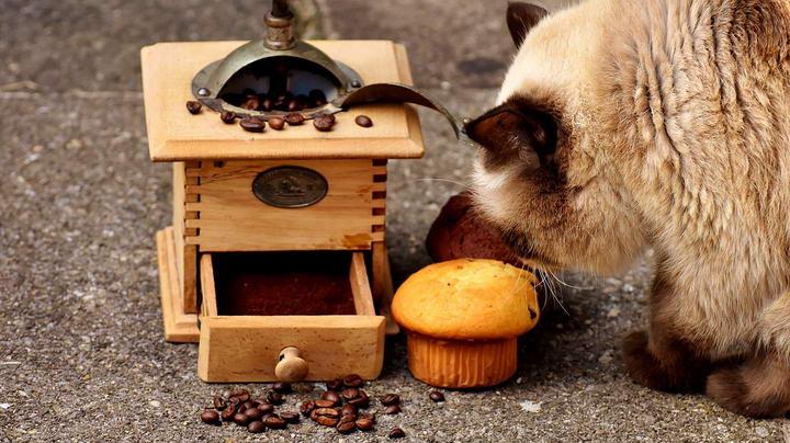 比较全面的猫咪不能吃的食物