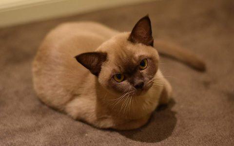 猫咪的六个问题:分离焦虑症,乱咬东西让人很烦恼?
