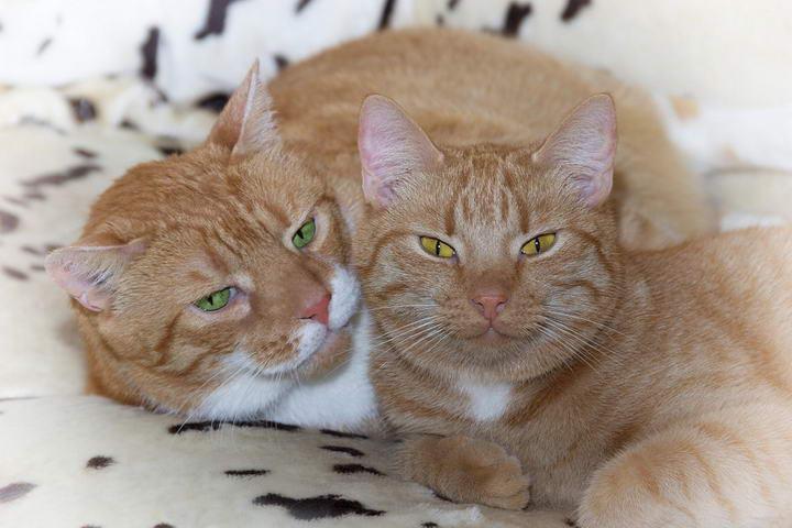 猫咪发情知识:母猫没有月经,发情期原来有季节性!