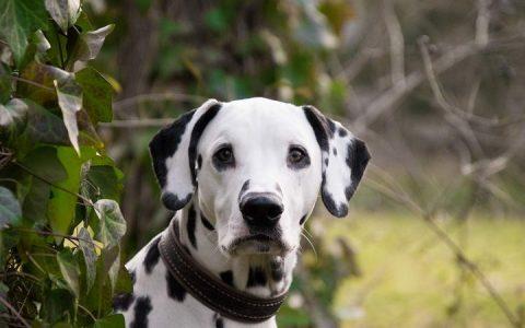 母狗常见生殖系统疾病