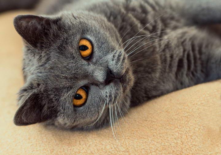 猫咪和狗狗绝育后行为的改变