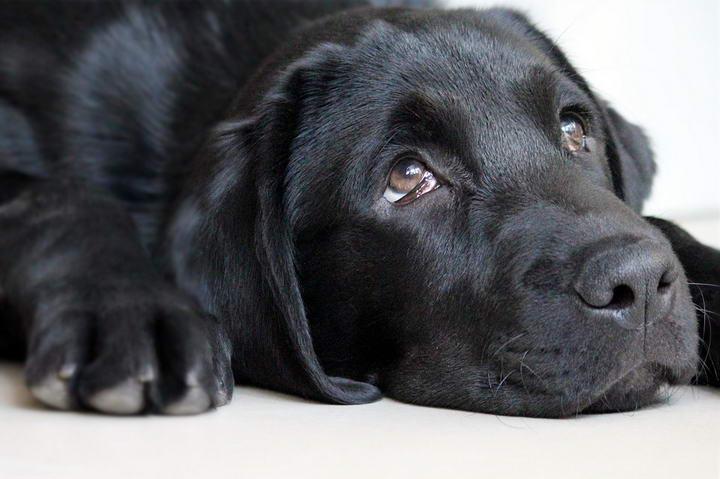 狗狗慢性肾病的相关介绍
