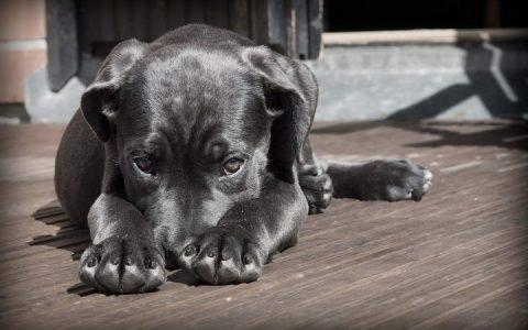 狗狗湿疹反复搔痒怎么办?