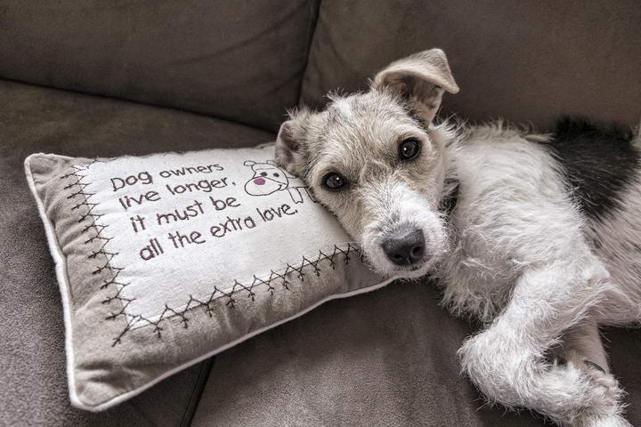 狗狗各种易患的皮肤炎