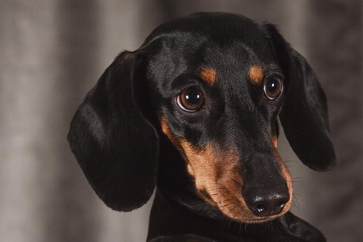 狗狗胰脏炎会有那些症状?