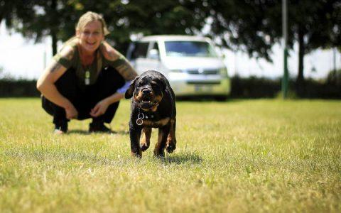 狗狗外出常见户外寄生虫&预防方法