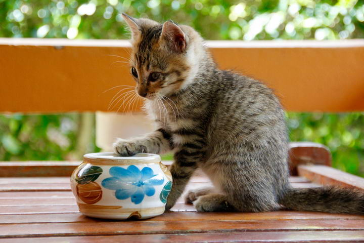 如何让猫咪也能够健康的使用精油护理