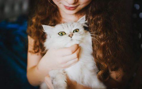 要想让猫咪喜欢你,记住不要强迫它做不想做的事情