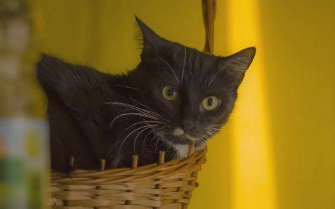 带猫咪去宠物医院有哪些注意事项