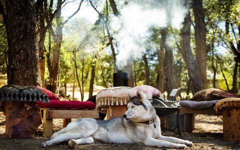 狗狗露营有哪些需要注意的地方