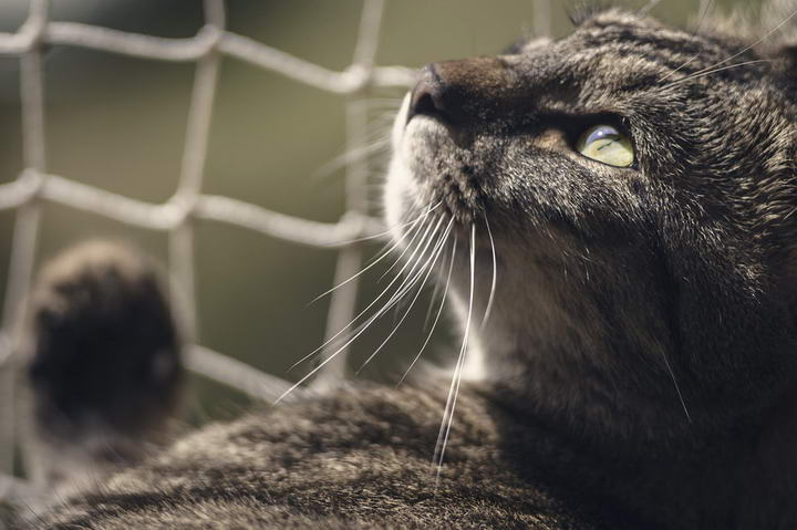 猫咪常见疾病Top10(上):肾衰竭、猫瘟等