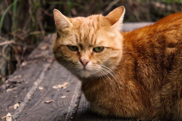 为什么猫咪有的时候感到压力大,怎么缓解?