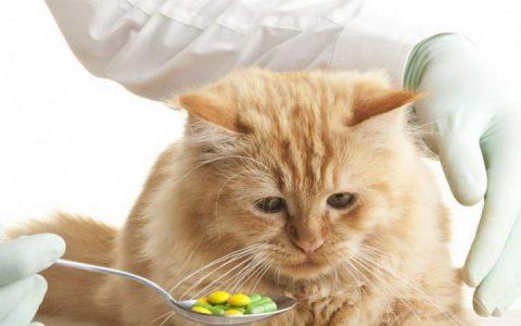 掌握正确的给猫咪喂药的方法