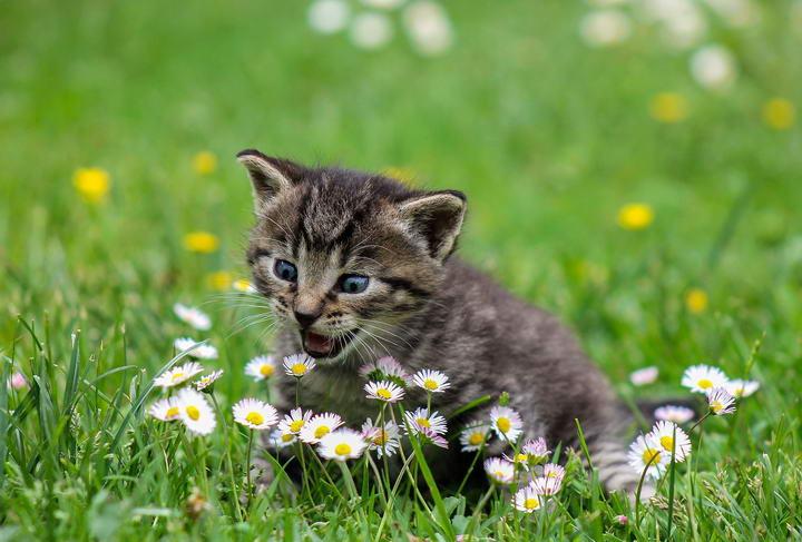 日常生活中有哪些对猫咪比较危险的物品
