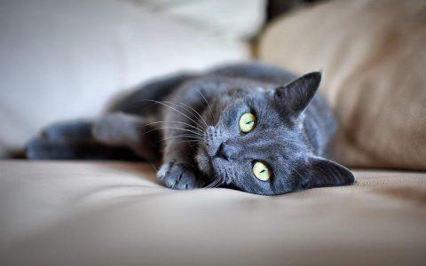 猫咪的肠胃如何才能照顾好
