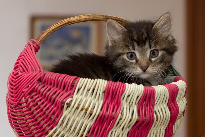 幼猫小奶猫收养照顾事项