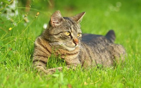 带猫咪出门遛猫的时候有哪些注意事项