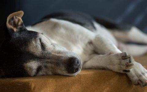 狗狗皮肤病一年四季都有