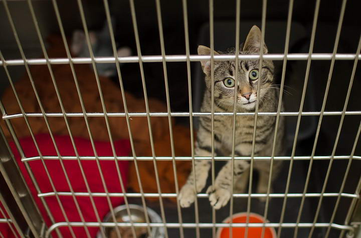 网友支招如何让猫咪晚上不跑酷:用笼子