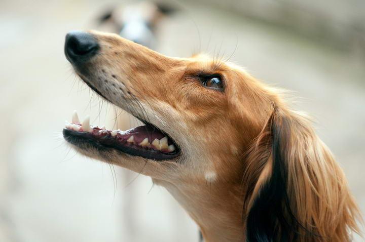 狗狗爱喘气的四个原因
