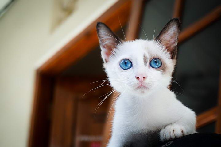 宠物冷知识:看谁先眨眼?跟猫咪比赛你一定会输!