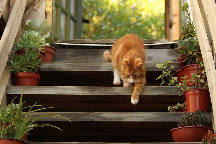 宠物冷知识:为什么猫咪走路的时候没有一点声音
