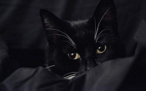 猫咪生病时的几个异常行为