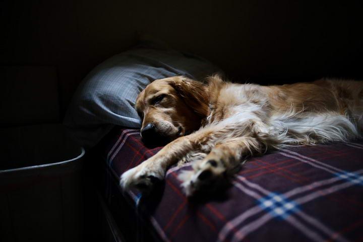 狗狗睡姿代表了它的个性,看看你家的狗狗属于什么性格