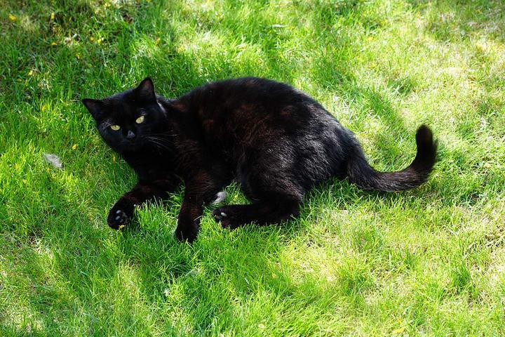 为什么有的猫咪喜欢追着自己的尾巴玩